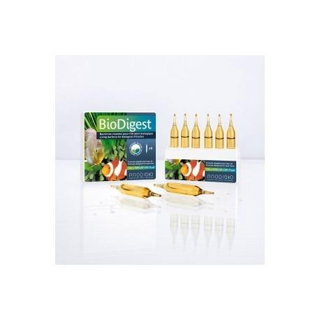 Bactéries Biodigest 30 ampoules