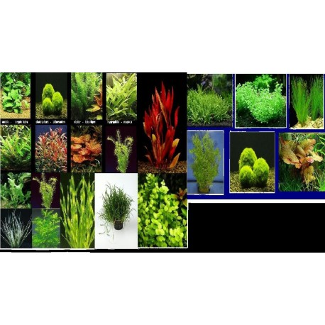 Lot de 10 plantes en bouquet