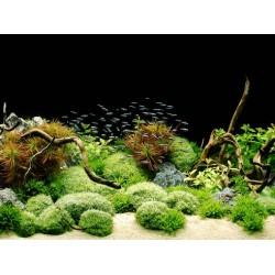 Poster double Rocks&Plants TETRA
