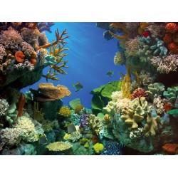 Poster double Shark&Coral TETRA