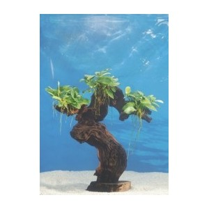 Plante sur racine/roche