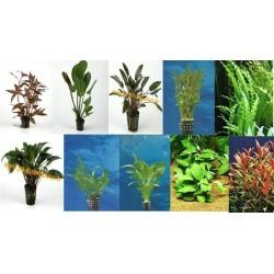 Lot de 15 plantes en pot