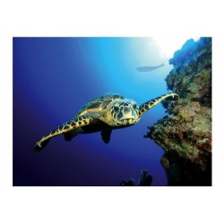 Poster double Turtle&Reef TETRA