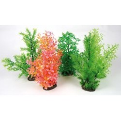 Plante diffuseur extra large